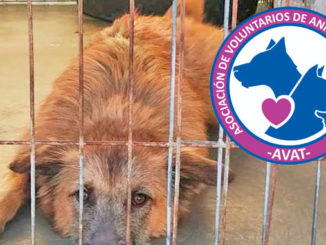 Asociación de Voluntarios de los Animales de Torrevieja (AVAT)
