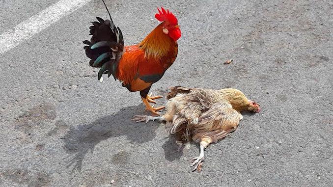 comunicado-los-verdes-aves-parque-de-las-naciones-de-Torrevieja-1