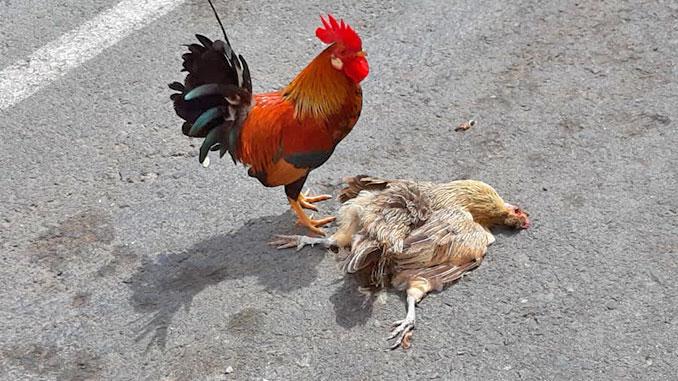 Comunicado-los-verdes-aves-parque-de-las-naciones-de-Torrevieja-1 (suom.
