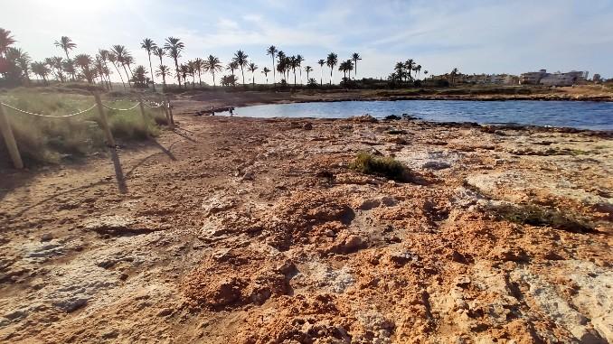 playa-para-perros-en-Torrevieja-pets-friendly-dogs-beach-3