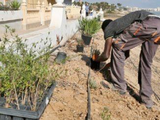recuperación ambiental torrevieja