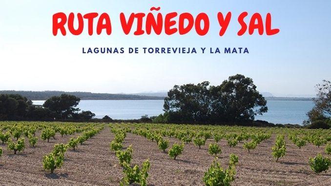 RUTA VIÑEDO Y SAL TURÍSTICA LAGUNAS DE TORREVIEJA Y LA MATA (2)