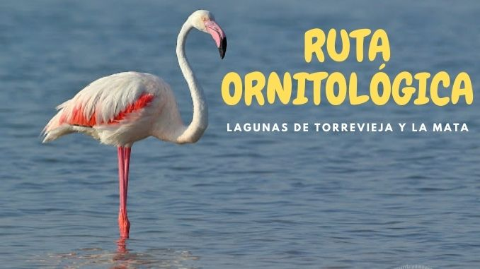 RUTA ORNITOLÓGICA TURÍSTICA LAGUNAS DE TORREVIEJA Y LA MATA