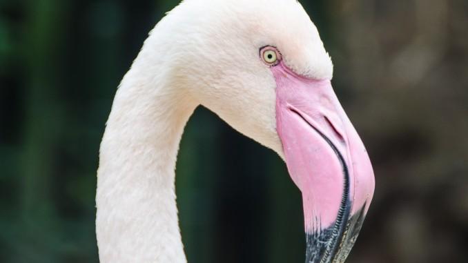 aves faunatura torreviejacom