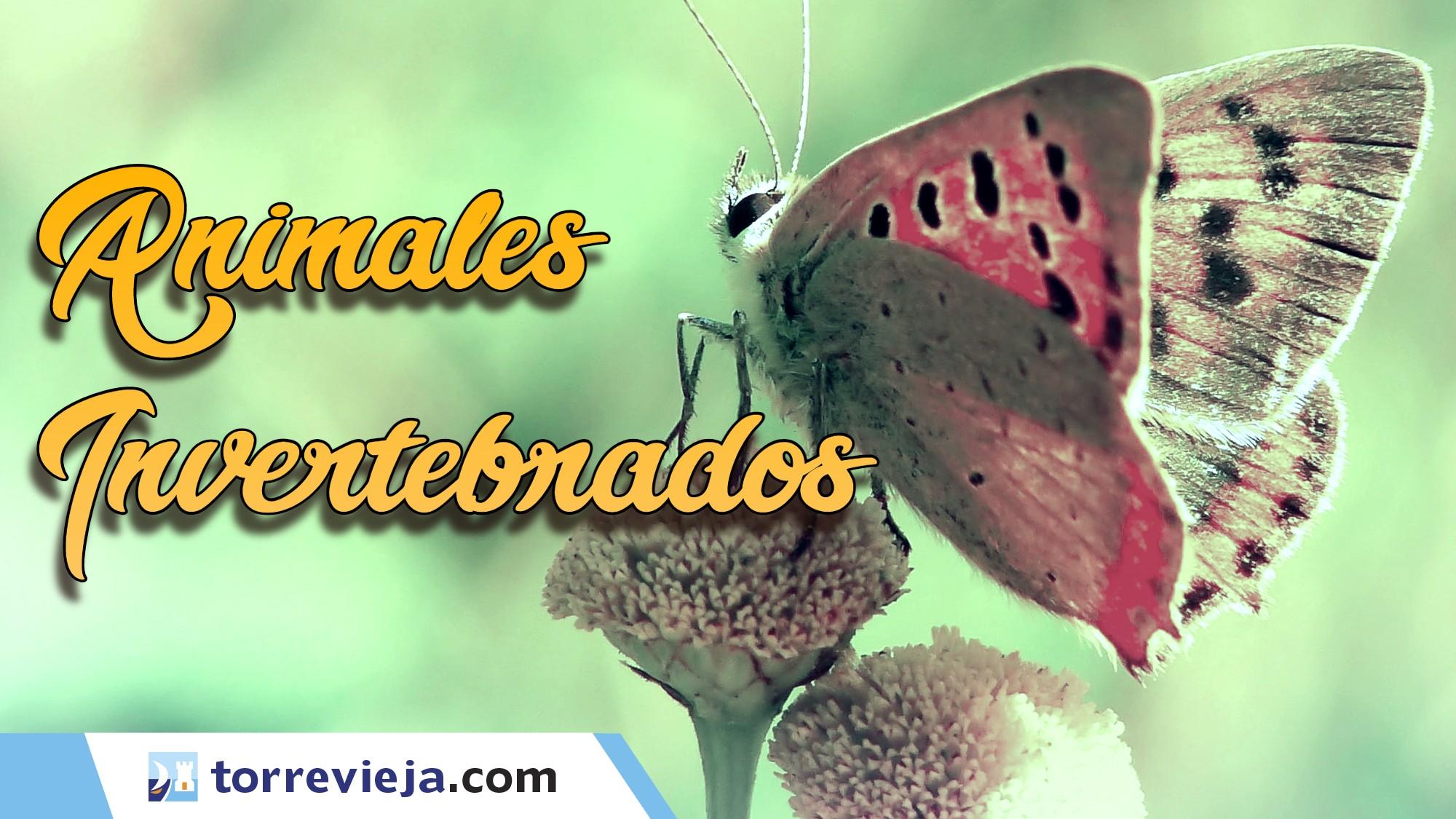 Animales Invertebrados en el parque Natural de La Mata