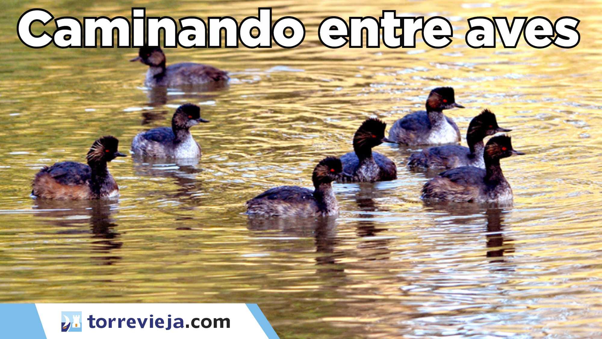 Caminando entre aves en el parque Natural de La Mata